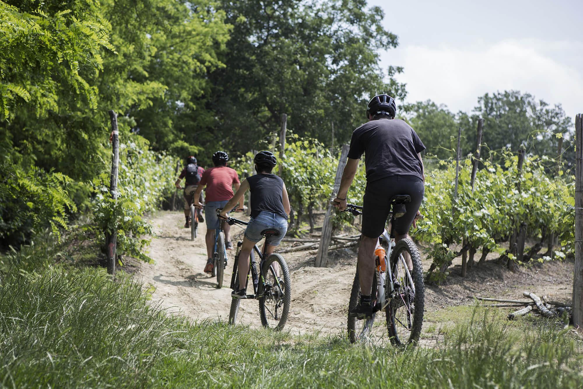 menscorpore-experience-vineyard-biking-08